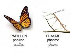 Vocabulaire insectes et serpents