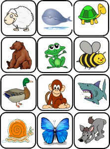 images flashcards animaux
