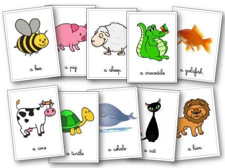 Extrêmement Les animaux en anglais aux cycles 2 et 3, flashcards, leçons, mémory NW56