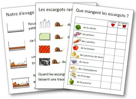 Affichages sur les escargots