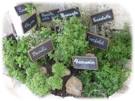 Faire des plantations de plantes aromatiques