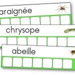 Atelier des mots des petites bêtes du jardin
