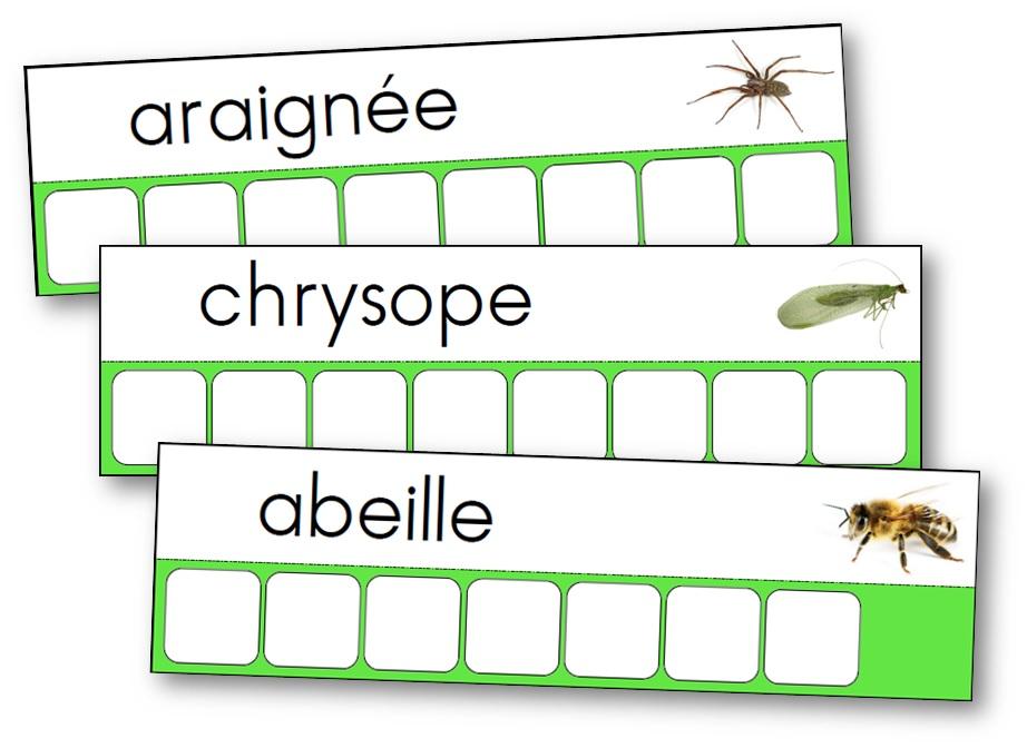 l 39 atelier des mots des insectes et des petites b tes du jardin. Black Bedroom Furniture Sets. Home Design Ideas