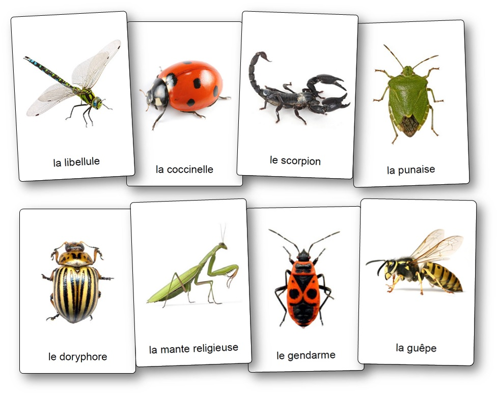 imagier insectes