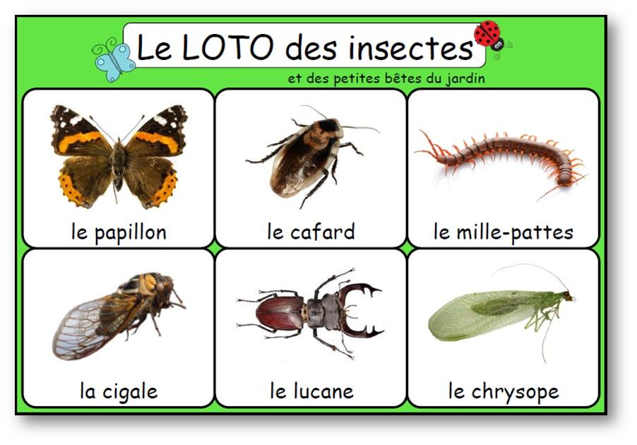 Jeu de loto des insectes