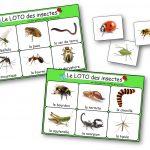 Loto des insectes