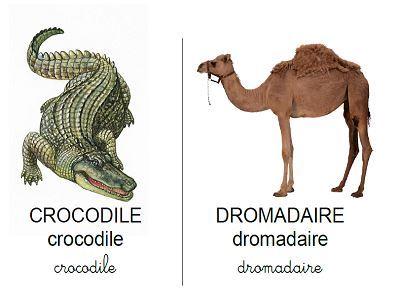 Vocabulaire les animaux des pays chauds