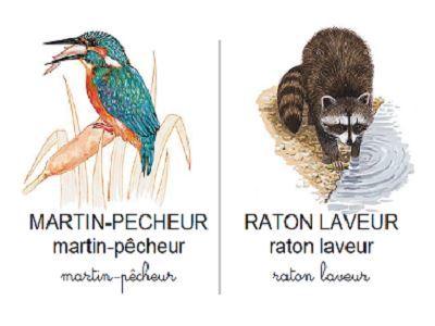 Vocabulaire les animaux du bord de l'eau