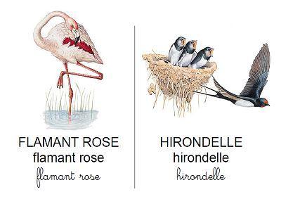 Vocabulaire oiseaux et rapaces