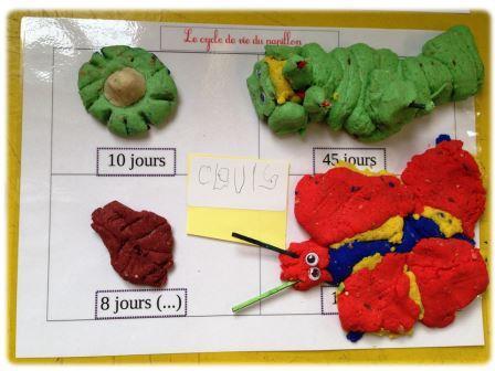Le cycle de vie du papillon en pâte à modeler