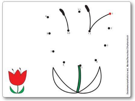 Points à relier 1 à 12 Tulipe fleur