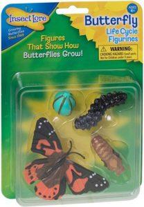 Etapes du cycle de vie du papillon