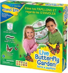 Kit pour élever des chenilles, Serre à papillons, Insect Lore