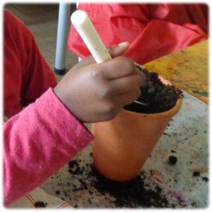 Planter des jacinthes en maternelle