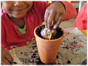 Séquence Planter des jacinthes en maternelle