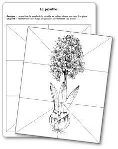 Reconstituer le puzzle de la jacinthe