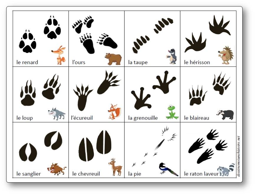 Jeu sur les empreintes des animaux de la forêt