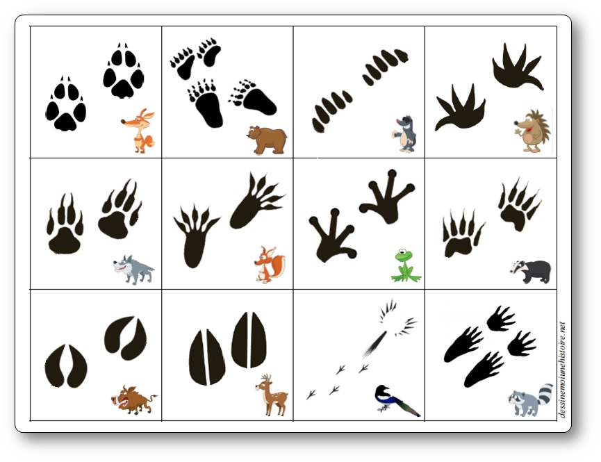 Jeu de mémoire des empreintes des animaux de la forêt