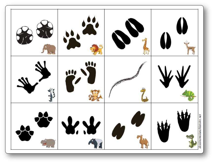 Jeu de mémoire sur les empreintes d'animaux d'Afrique, empreintes animaux Afrique