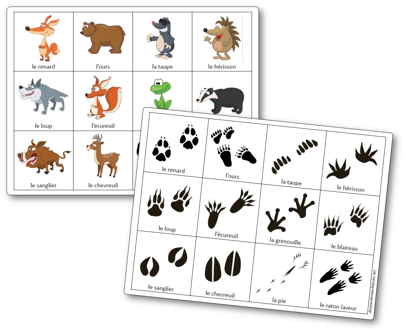 Jeu sur les empreintes des animaux de la forêt, empreintes d'animaux de la foret à imprimer