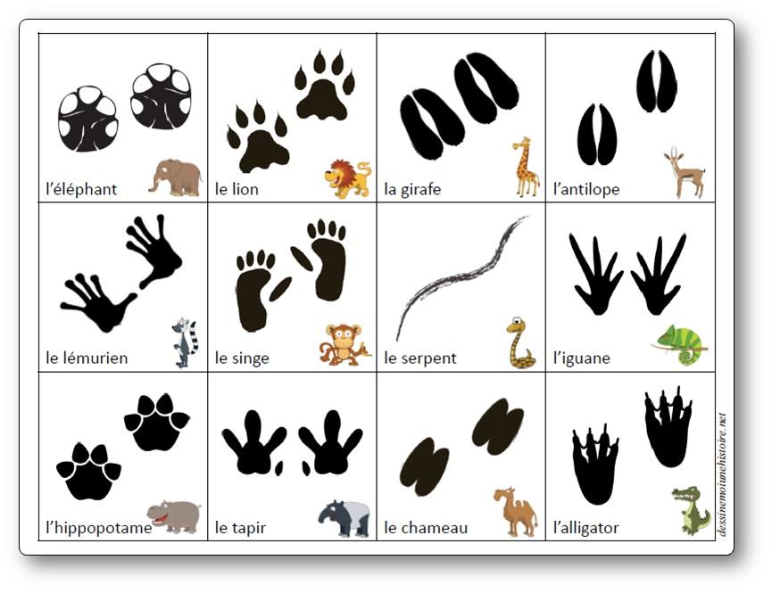 Jeu sur les empreintes d'animaux d'Afrique, empreintes animaux sauvages