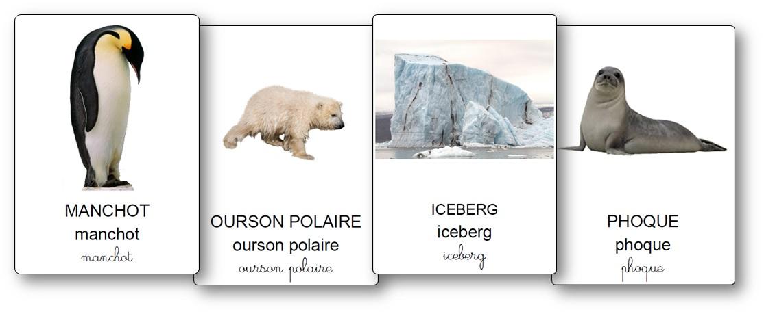 Imagier de la banquise et des animaux des régions polaires, imagier animaux polaires maternelle