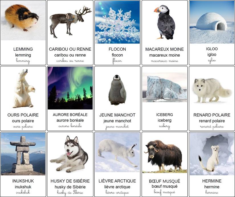 Imagier de la banquise, des animaux polaires et de la culture nordique
