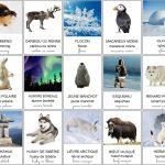 Imagier de la banquise et des animaux des régions polaires