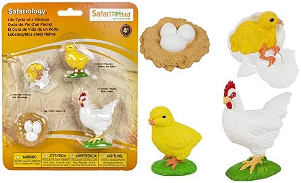 Cycle de vie d'un poulet, images séquentielles oeuf poussin poule