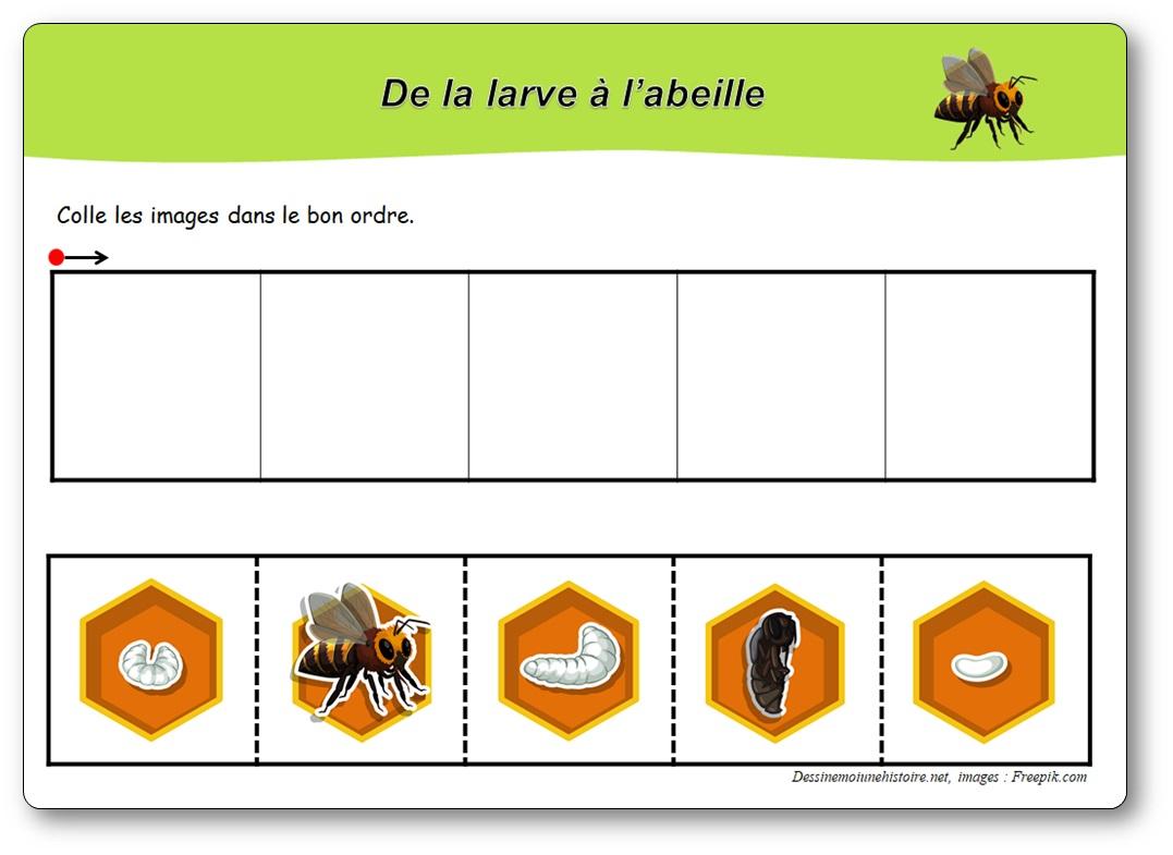 Cycle de vie des abeilles en maternelle