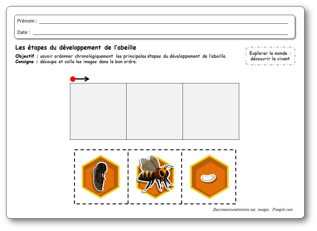 activité pédagogique étapes développement abeilles