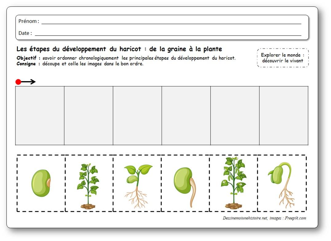 images séquentielles plantations maternelle, images séquentielles haricot qui pousse