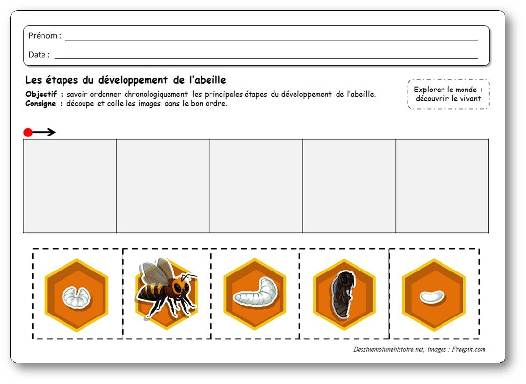 images séquentielles développement abeilles, cycle de vie des abeilles