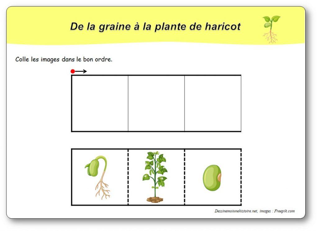https://dessinemoiunehistoire.net/wp-content/uploads/2020/01/images-sequentielles-germination-haricot-1024x746.jpg
