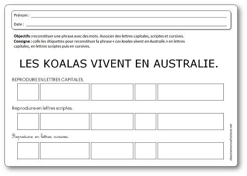 Activité sur les koalas : reconstituer une phrase avec des étiquettes mots