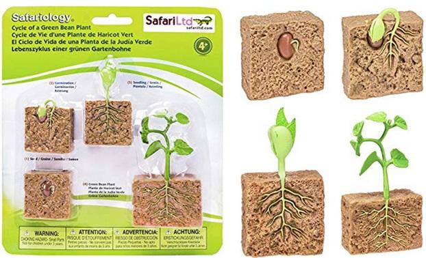 Lien Amazon miniature Cycle de vie d'un plant de haricot