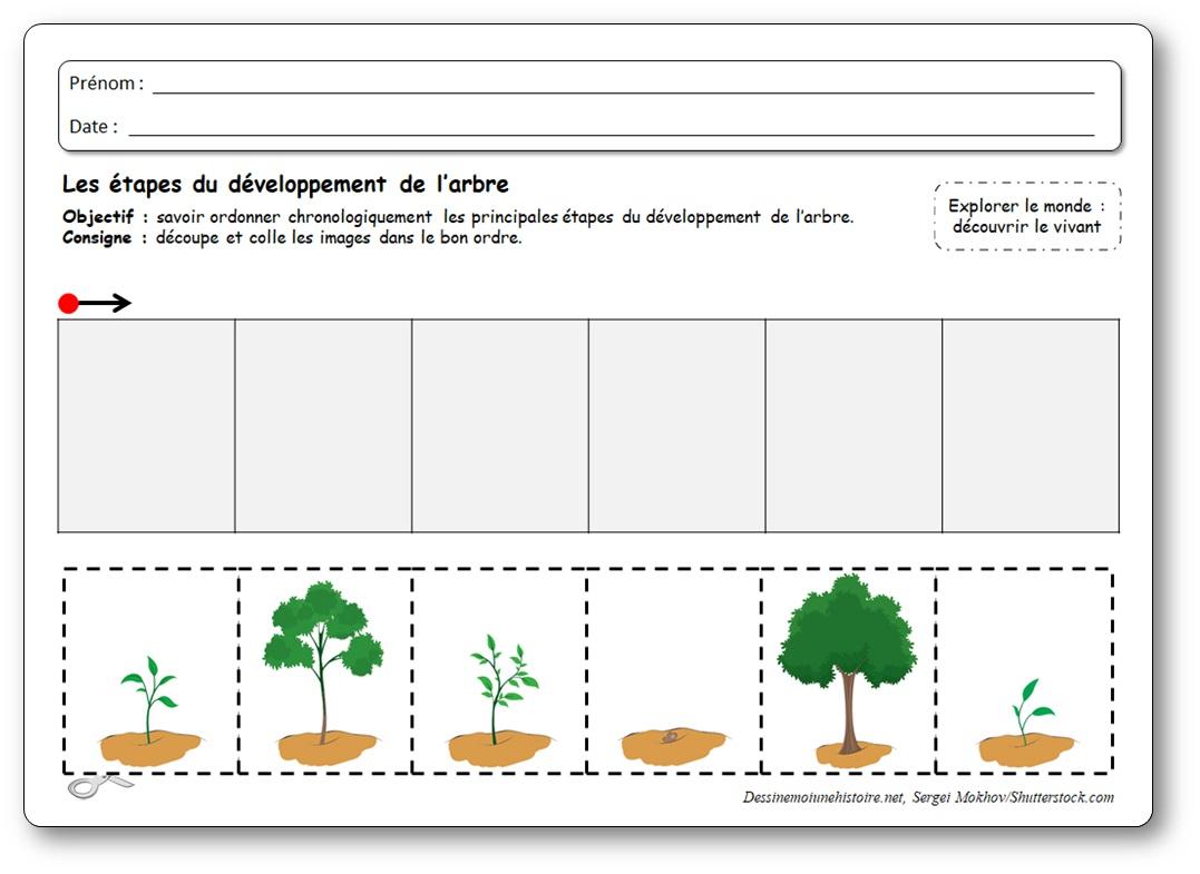 De la graine à l'arbre : 5 images séquentielles