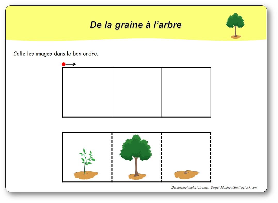 De la graine à l'arbre : 3 images séquentielles
