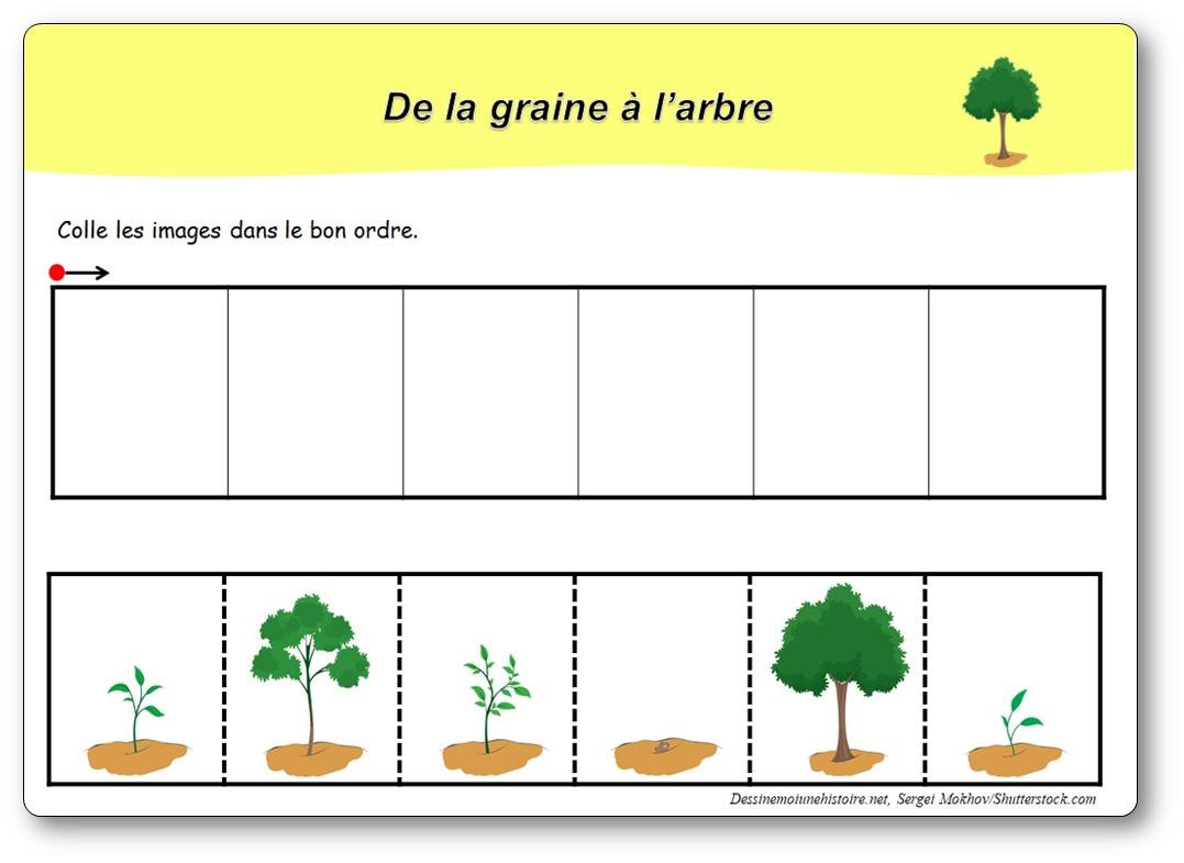 5 images séquentielles de la croissance de l'arbre, le cycle de l'arbre en maternelle
