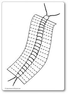 Découper une feuille de papier : les pattes du mille pattes