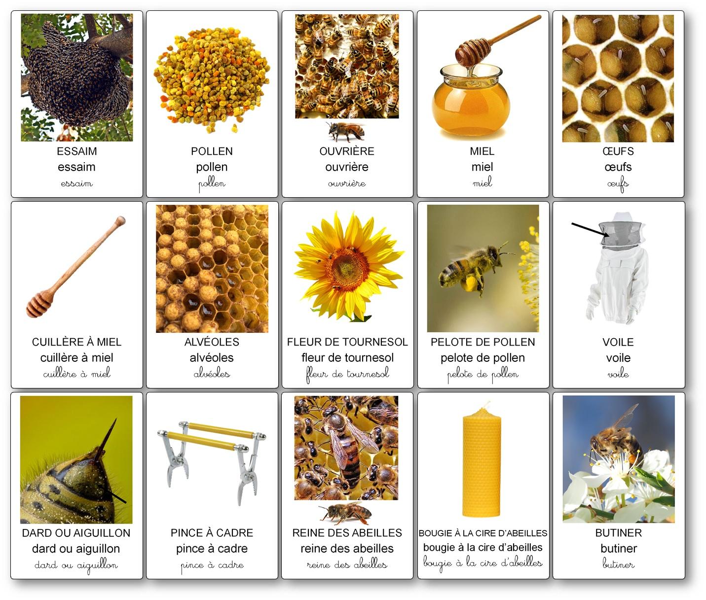 Imagier des abeilles apiculture maternelle, imagier abeilles