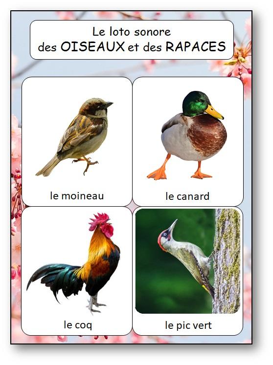Jeu loto chants d'oiseaux et rapaces, jeu reconnaitre les chants oiseaux