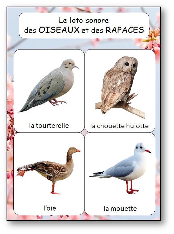 Jeu de reconnaissance des cris d'oiseaux et rapaces, chants d'oiseaux des jardins