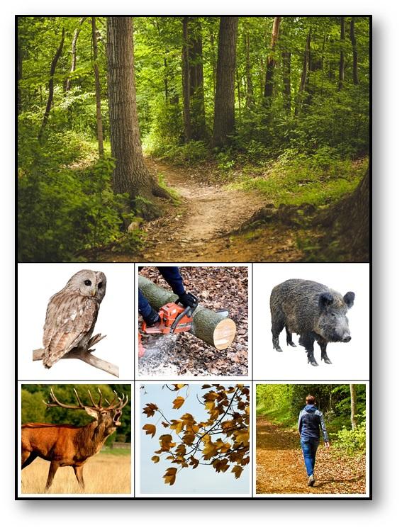 Loto des environnements sonores La forêt