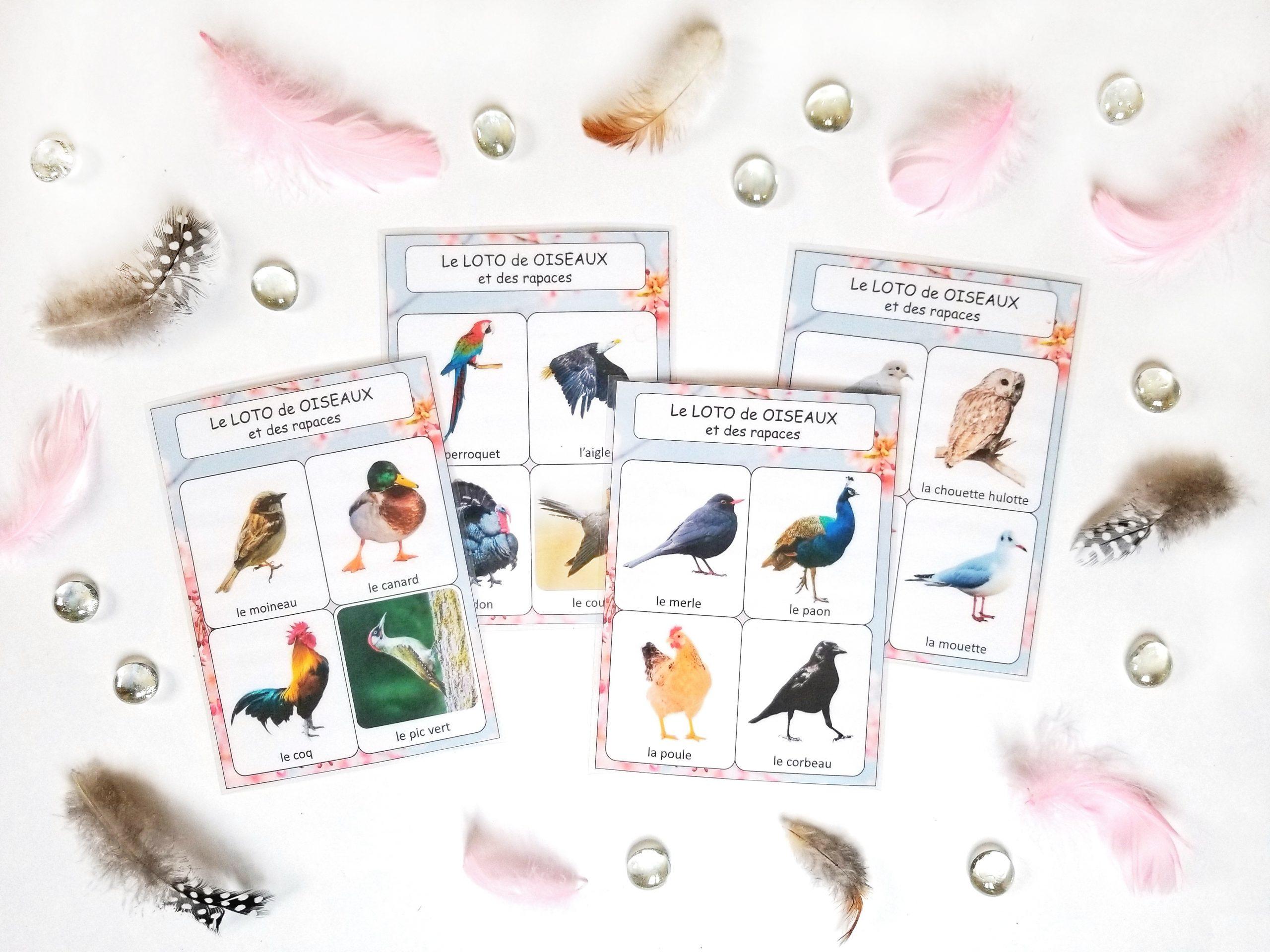 Loto sonore des chants des oiseaux et des rapaces, reconnaître les chants d'oiseaux, identification chants d'oiseaux