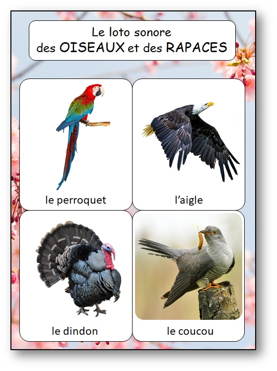 Loto sonore des chants oiseaux rapaces, apprendre les chants d'oiseaux