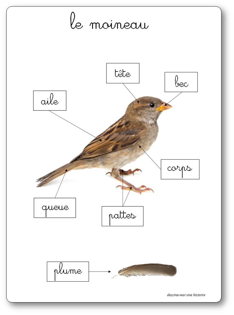 Reconstituer les parties d'un oiseau moineau maternelle