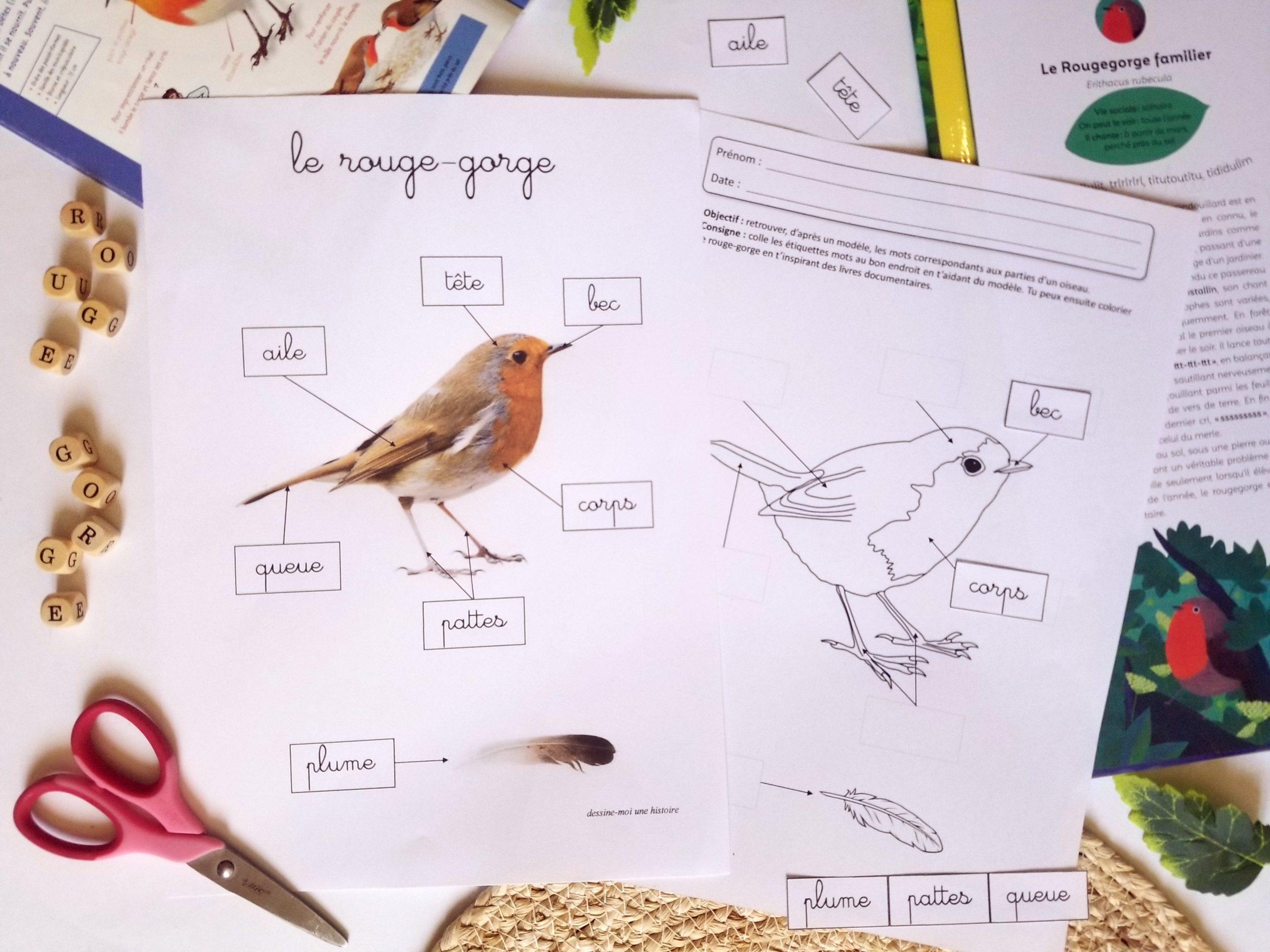 activité maternelle oiseau rouge-gorge, fiches pédagogiques sur les oiseaux