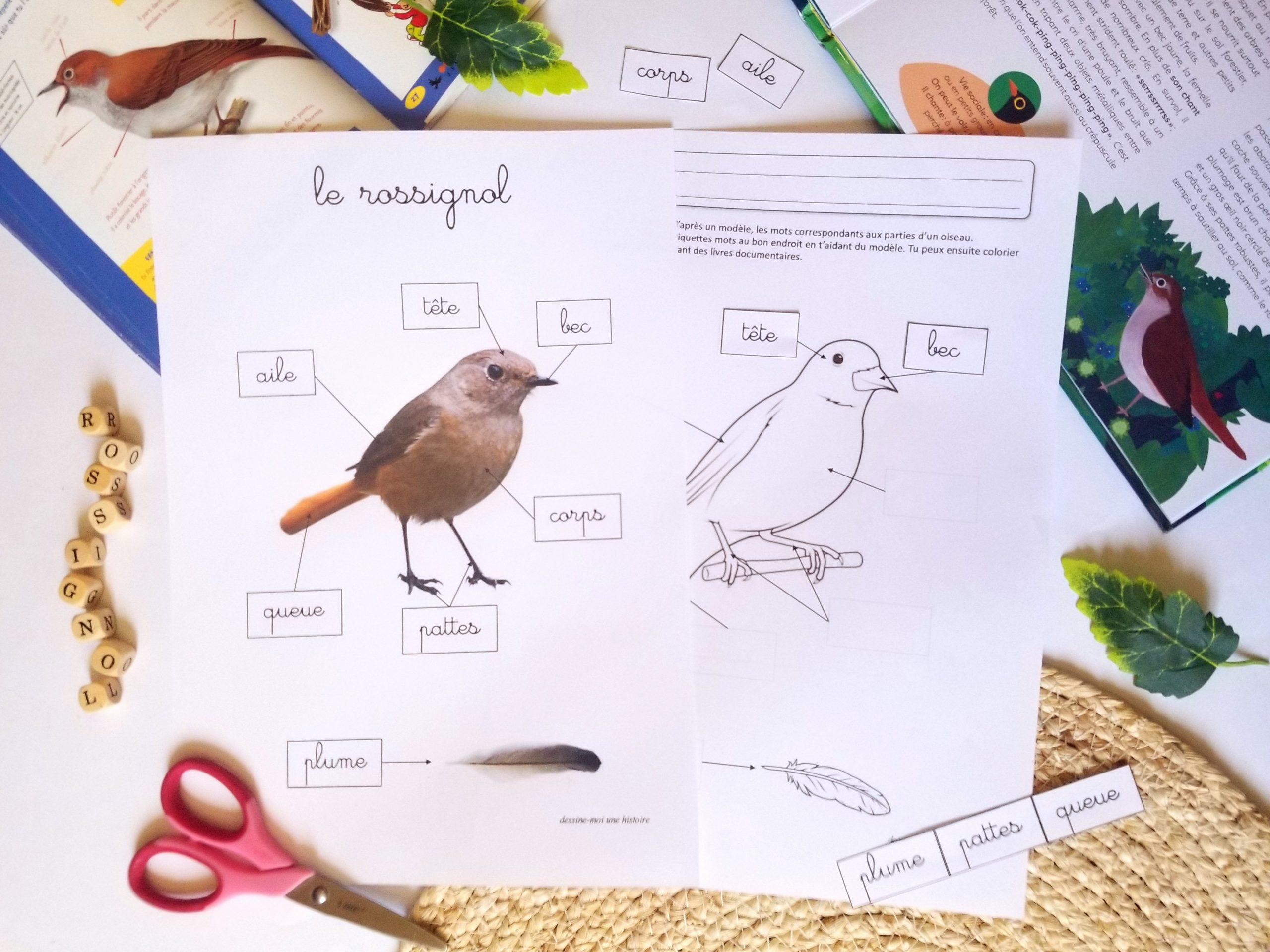 activité oiseaux maternelle rossignol, activité autour des oiseaux