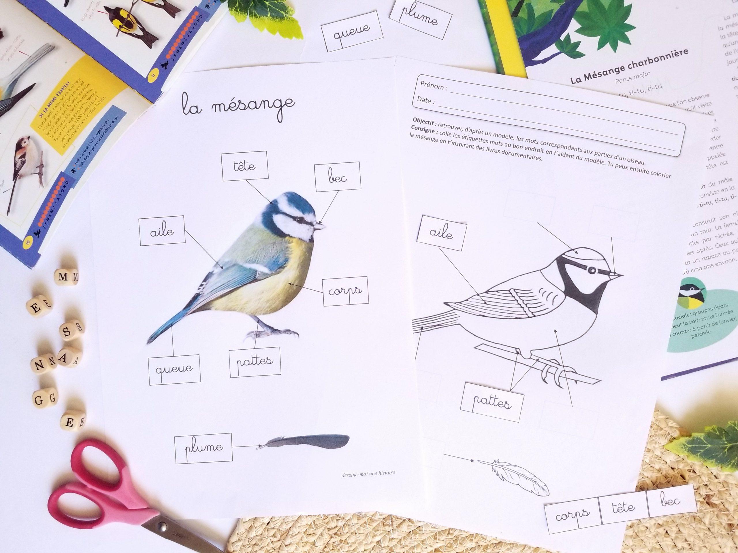 morphologie oiseau maternelle mésange, fiches pédagogiques sur les oiseaux